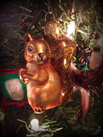golden squirrel3