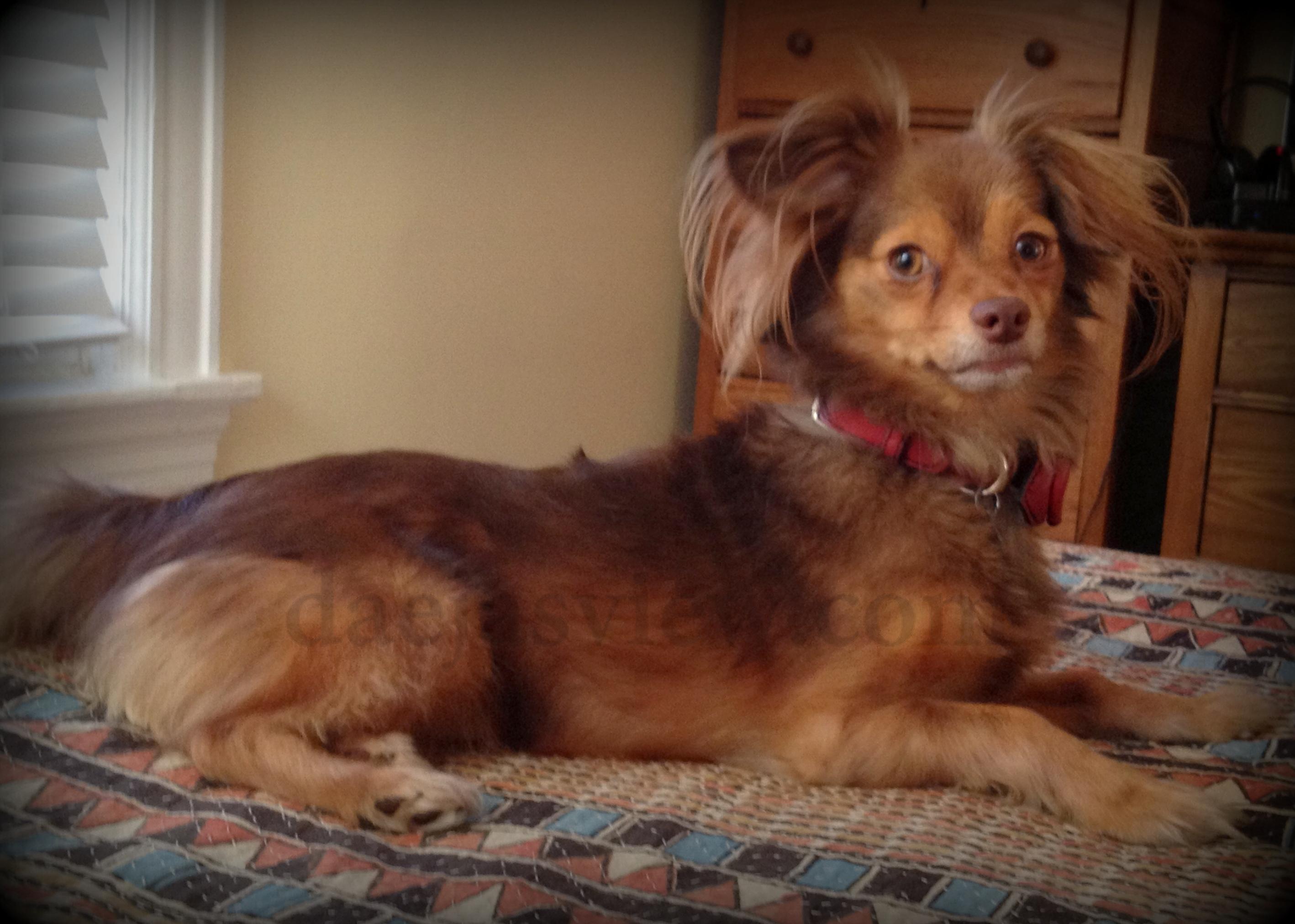 Artistic Dog Grooming Cranston Ri
