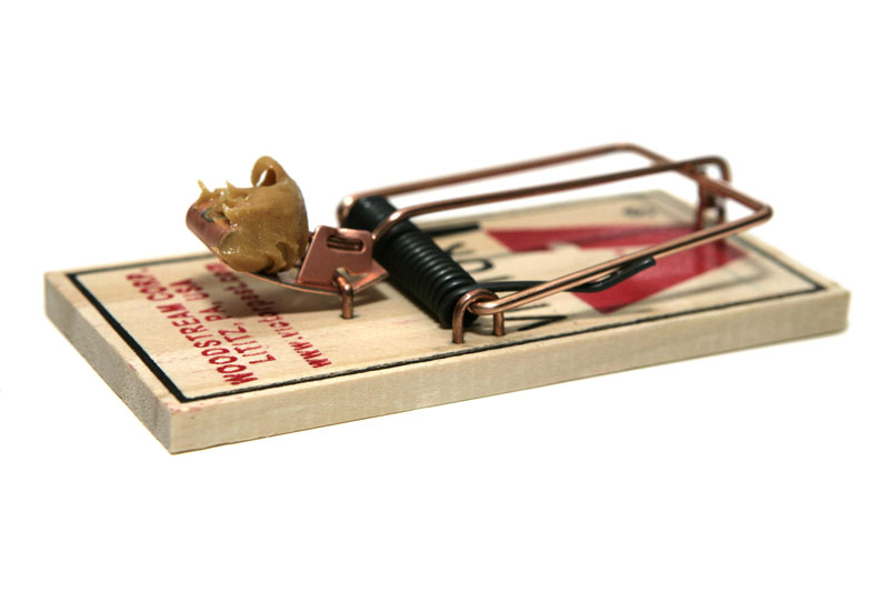 Mouse Traps To Keep Cats Off Counters