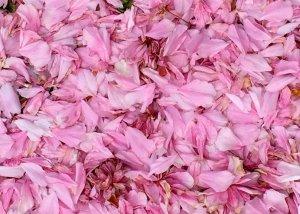 pink snow3