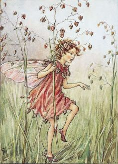 fairy in the grass